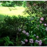 aardweg_landscaping_1