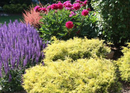 Aardweg-Landscaping-Perennials-Philadelphia-Garden-2
