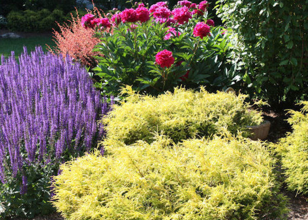 Popular Perennials For Your Philadelphia Home Garden