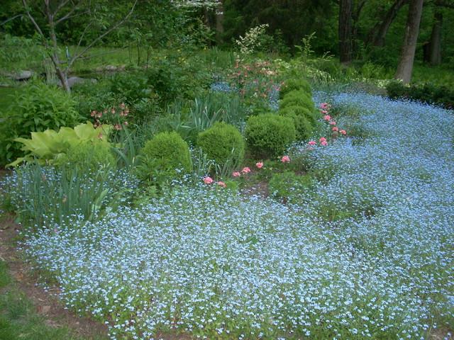 Naturalized woodland setting in suburban Philadelphia