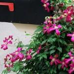 mailbox-garden-main-line-landscape-design - Copy
