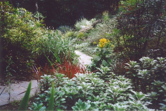 Bright greenery along a paved pathway