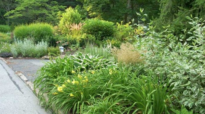 Naturalized garden in Philadelphia