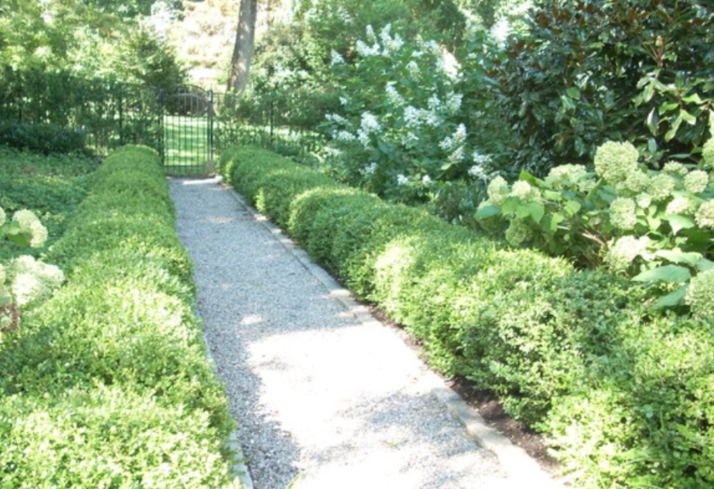 a clean pathway lined with bushes