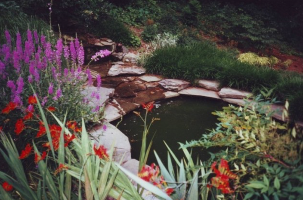 Beautiful landscaped pond surrounded by plant life