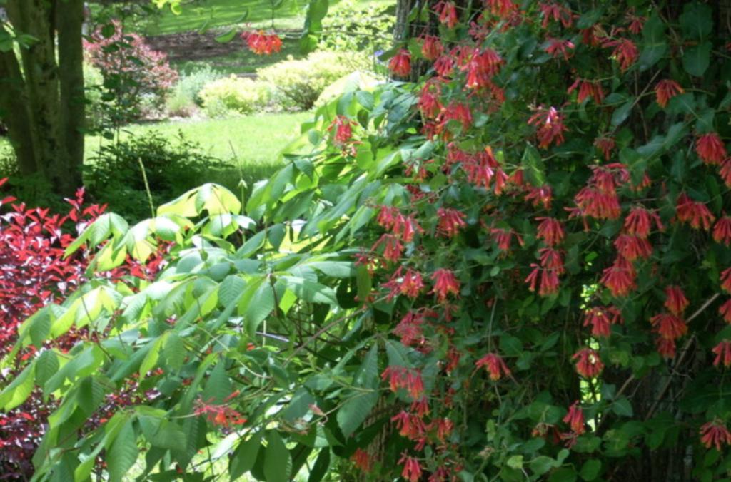 Beautiful Garden along the Main Line