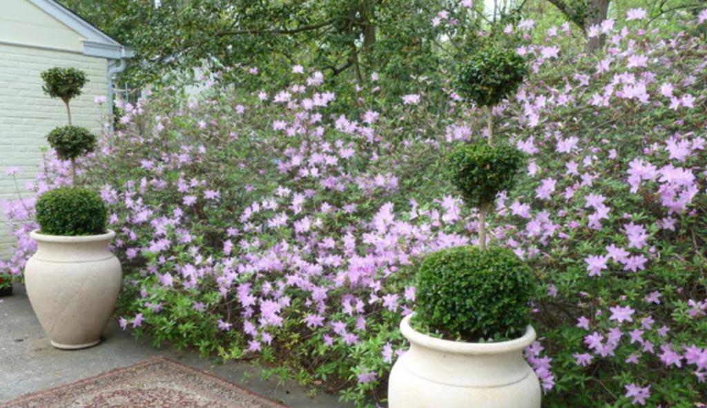 Main line garden of purple flowers